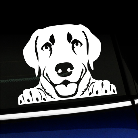 Peeking Lab - Labrador Retriever - Vinyl Decal Product Page